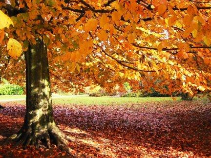 Autumn in the Carolinas