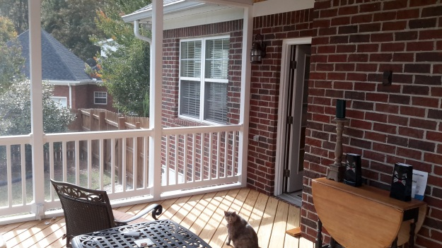 Even this Columbia, SC, homeowners' cats love the screened porch!