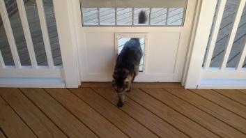 loving the kitty door