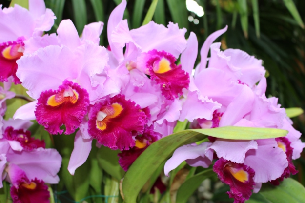 Having trouble growing orchids? A sunroom provides the perfect environment!